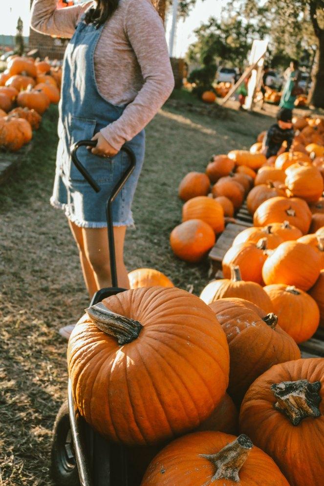 nomadic-minimalist-gift-idea-pumpkin-patch