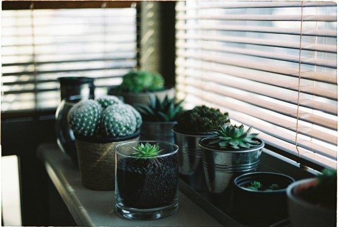 environmental-minimalist-gift-ideas-succulent
